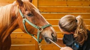 Horsemanship Dentistry, The Equine Practice Inc, Geoff Tucker DVM