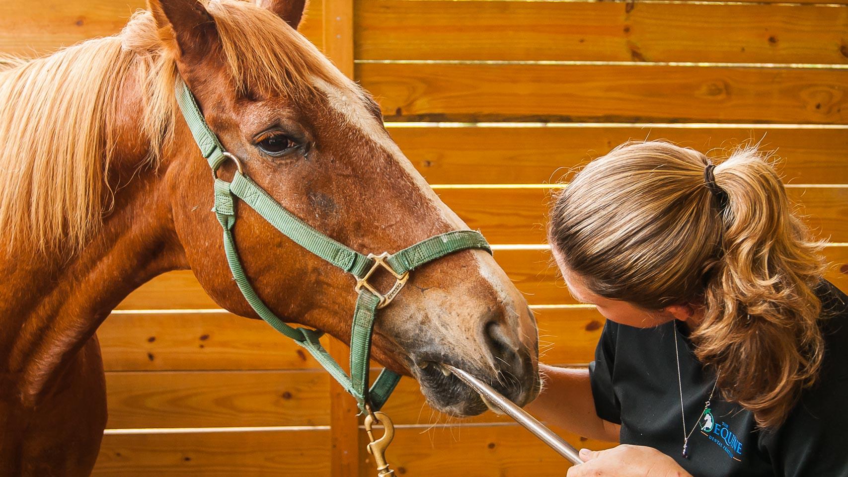 Horsemanship Dentistry