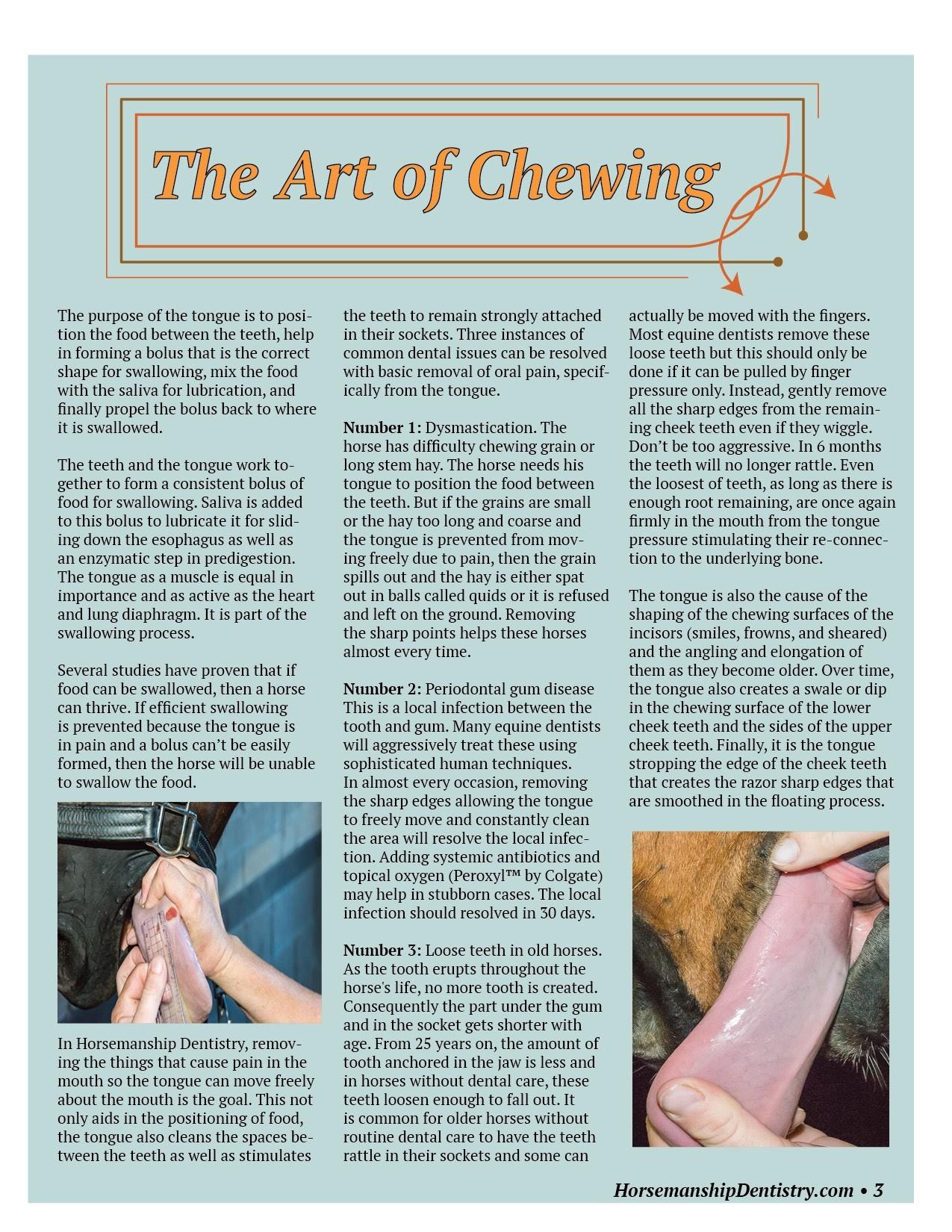 Horsemanship Dentistry Newsletter Volume 1 page 3