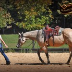 Western Horses For Sale Horse Of My Dreams