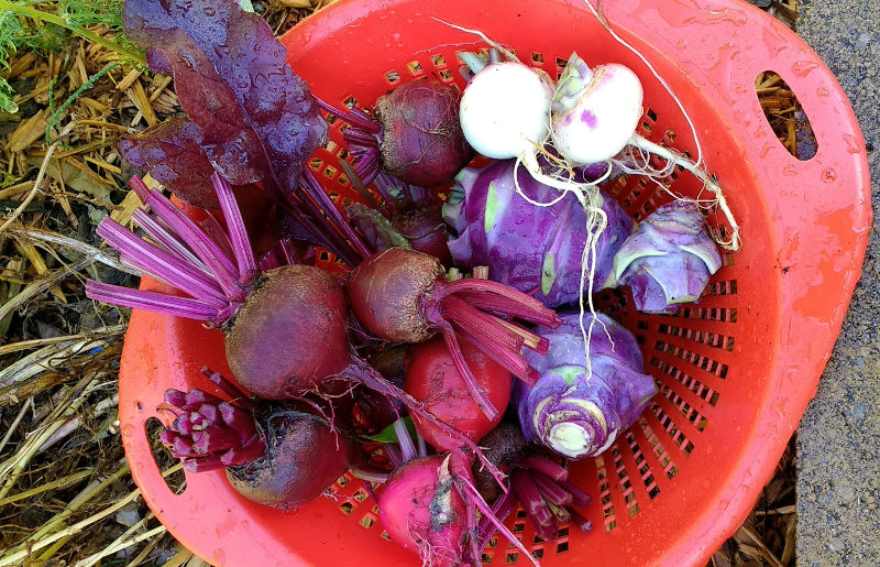 Beets, Kohlrabi, and Turnips | Horseradish & Honey