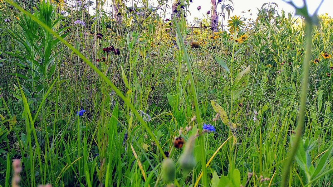 Dog's Eye View of Wildflowers | Horseradish & Honey