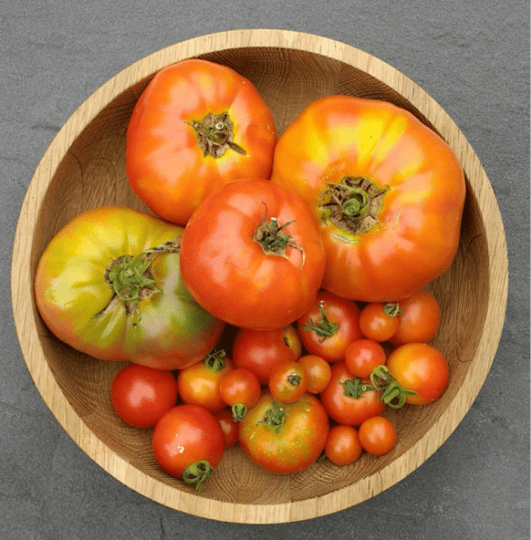 Early August Tomato Harvest | Horseradish & Honey