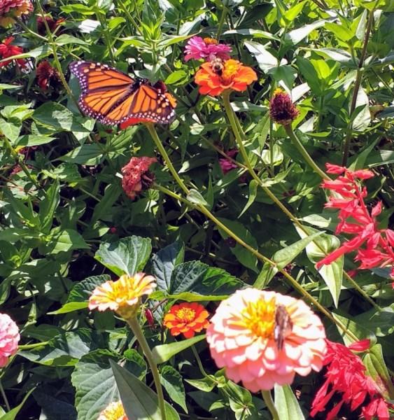 Pollinators Paradise | Horseradish & Honey