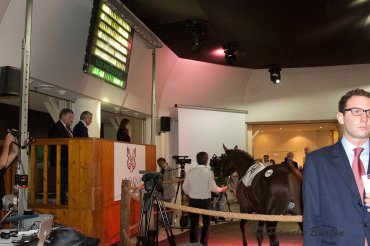 Arqana October Arabian Sale Saint Cloud