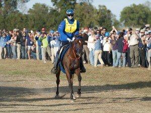 Alltech FEI World Equestrian Games 2010™