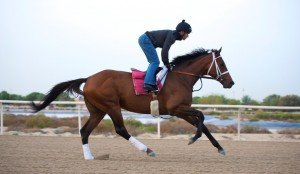Pat Dobbs puts Dubai World Cup contender Candy Boy through his paces