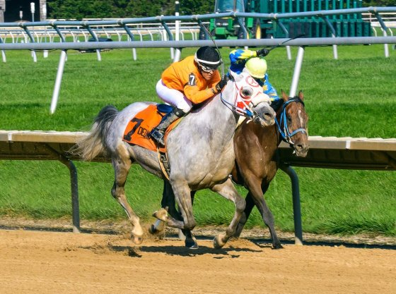 Easter Man winning The Delaware Park Arabian Classic