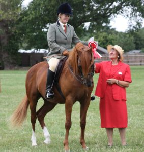 Stallion Beeston Hakim wins 2017 Racehorse to Riding horse class, presented by Anne Brown
