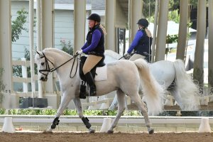 Dr.-Susanne-Lanini-Just-In-Kayce-dressage