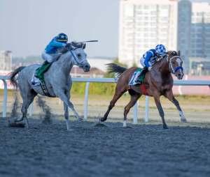 Sheikh-Zayed-Cup