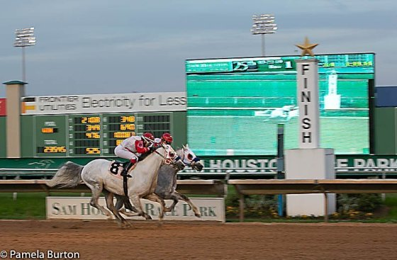 Easter Man (8) wins by a nose over Quick Sand AA. 3/22/19 Houston, TX.