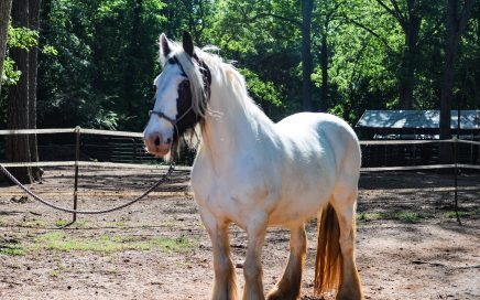 Meet Our Horses – Horses for Hope TRC