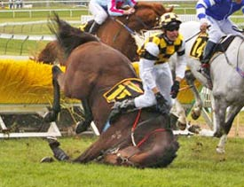 Image from the article Whats in it for the horse, asks scientist. Click the picture to go to the story.