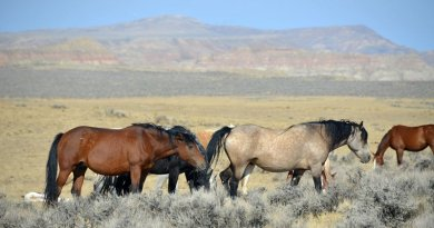 Two wild horse advocacy groups applaud US lawmakers for budgeting funds for use of contraceptive vaccines.