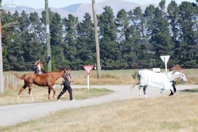 NZ-endurance-champs8340