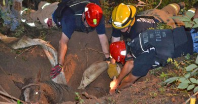 Rescuers work to place a harness around Glory.