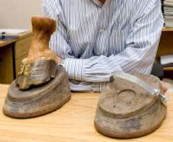 Shoes used to force Tennessee Walking horses to exaggerate their gait.