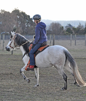 The DMRT3 mutation is also present in the Paso Fino breed, researchers say.