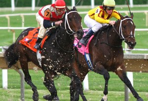 Successful racing as a two-year-old can point to a longer career, Australian research suggests.