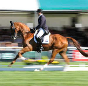 Clayton Fredericks and Walterstown Don at Burghley in 2012.