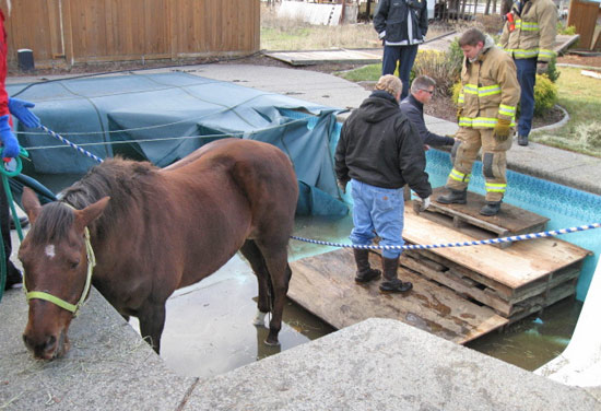 Rescuers work to make a set of steps to help get Missy out of the pool.