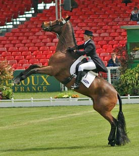 A French study has found that dressage and high school work stressed horses more than jumping, eventing and vaulting.