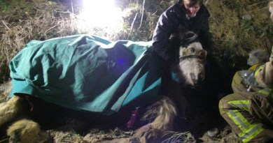 RSPCA inspector Nicky Thorne comforts Frank after she found him hanging by his neck over a cliff. Photo: Suffolk Fire and Rescue