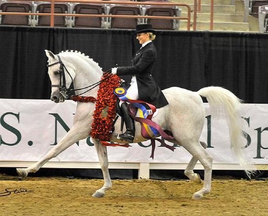 Arabian dressage horse a record breaker