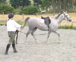 Horses on the lunge: They assymetry resulting from moving in a circle is not always even in both directions, researchers have found.