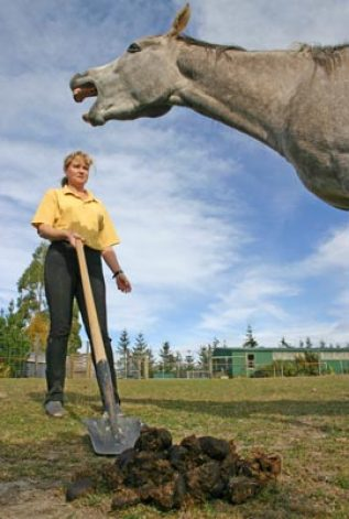 The microbial population in horse dung changes rapidly in the hours following defecation.