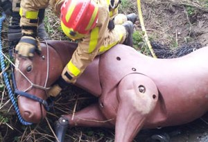 Training with Bulls-eye put the Shropshire Fire and Rescue Service in good stead to save the horse stuck in Strine Brook.
