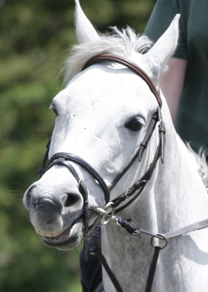 Combination or Snaffle Bridle with Flash Noseband.