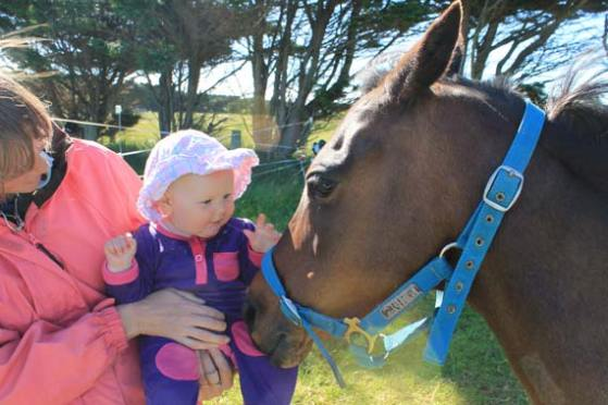 Young Alexi James gets friendly with her future mount, Glenvale Kit Kat. Her mum, Sarah Hamer, was working on the ground strapping for the family. Alexi is nearly six months old.