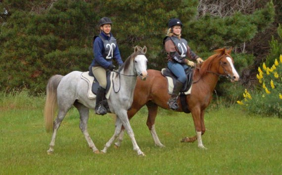Pure Crabbet full sisters Aurora Raffeah and Aurora Reniah, with Janina Brenner and Robin Marshall up. The two mares were in their first 40km ride.