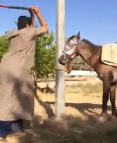 The horse collapsed when struck, and appeared to be struggling to regain its footing.