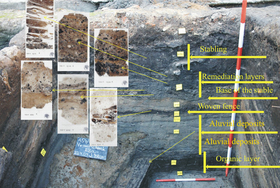 The sampling positions within the sediment.