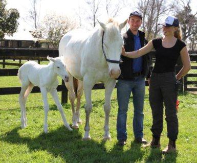 Windsor Park staff members Camilla and Vitalli meeting the new foal.