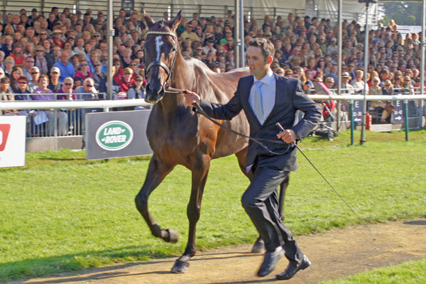 Jonathan Paget with Clifton Promise (NZL)