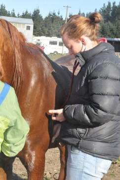 Veterinarian Emma Reedy from Canterbury Equine at work.