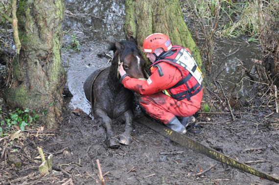 A firefighter tends to the mare as she is removed from the bog. Photo: Royal Berkshire Fire & Rescue/Twitter