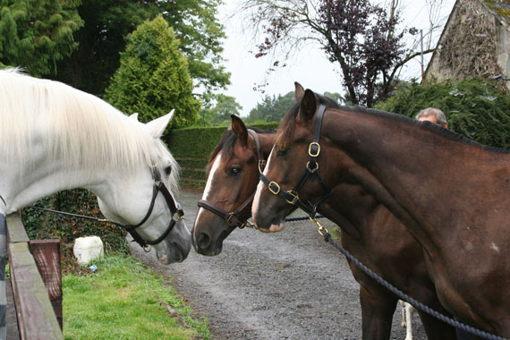 Cruising meets his two yearling clones, in 2013.