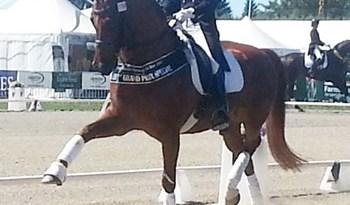 Dressage Horse of the Year title winner Julie Brougham and Vom Feinsten.