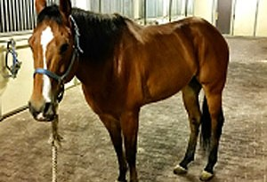 Charlie back at his stables. Photo: LAPD