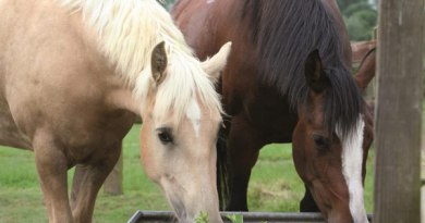 Good hydration is crucial in getting horses to their destination in good condition.