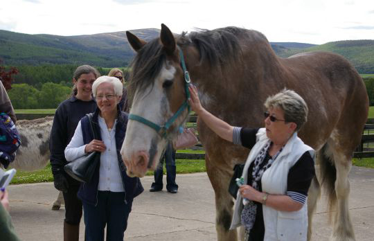 Digger meets some new friends at World Horse Welfare's Belwade Farm.