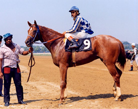 Secretariat pictured after his maiden win at Aqueduct Racecourse on July 15, 1972.