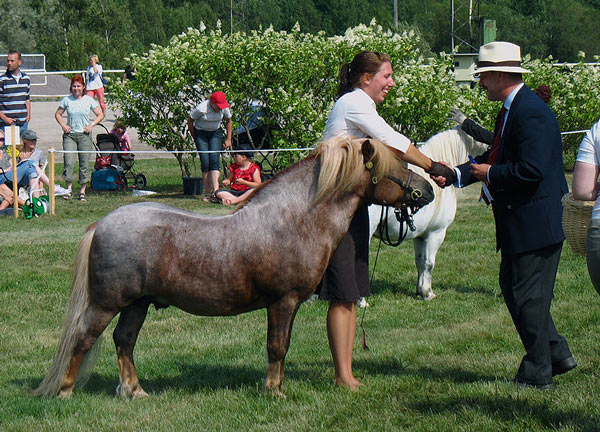 A 12-year-old strawberry roan Shetland pony stallion with a flazen mane is rewarded at a show. Photo: CC BY-SA 3.0 http://creativecommons.org/licenses/by-sa/3.0, via Wikimedia Commons