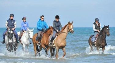 Horses enjoy a splash in the Mediterranean.