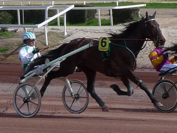 The performance of Standardbreds was still found to be up to scratch, even with less high-intensity exercise. Photo: Historicair GFDL CC BY-SA 3.0